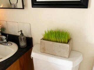 Cat Grass in Platner in Bathroom