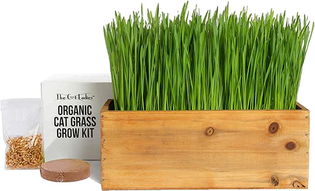 Cat Grass Planter Kit with Seeds